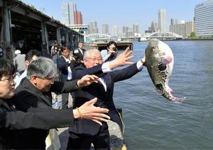 毎年初夏に営まれる「ふぐ供養」では築地市場の岸壁から隅田川にトラフグなどが放流される