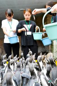 長崎)倍率3倍以上、人気のペンギン飼育係体験