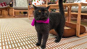 スカーフを巻いたネコ