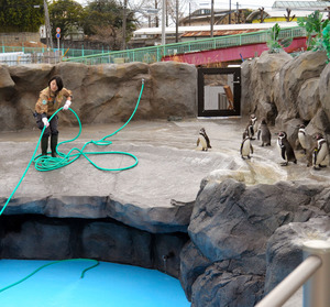 山口)プール清掃 ペンギン退屈 徳山動物園