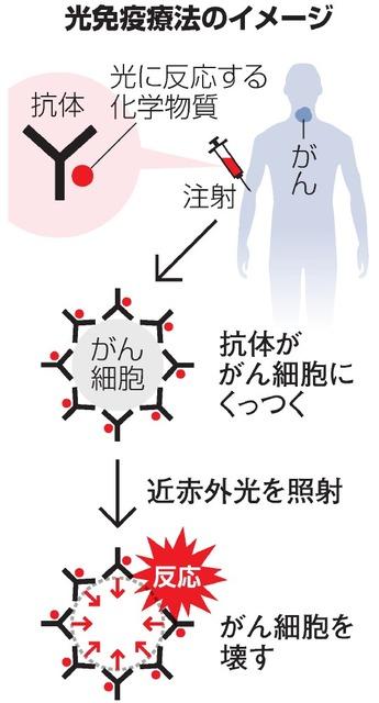 免疫 療法 光