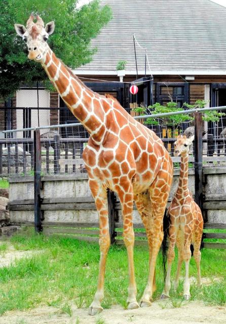 動物園 福山