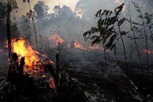 アマゾン火災で野焼き禁止 ブラジル、批判受け方針転換:朝日