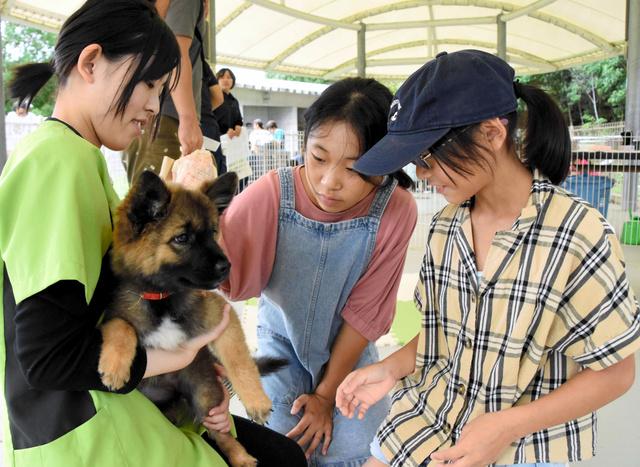 保護 犬 徳島 徳島県の犬の里親募集情報