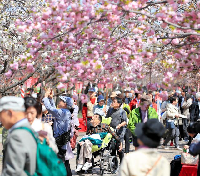 ニュース 速報 桜