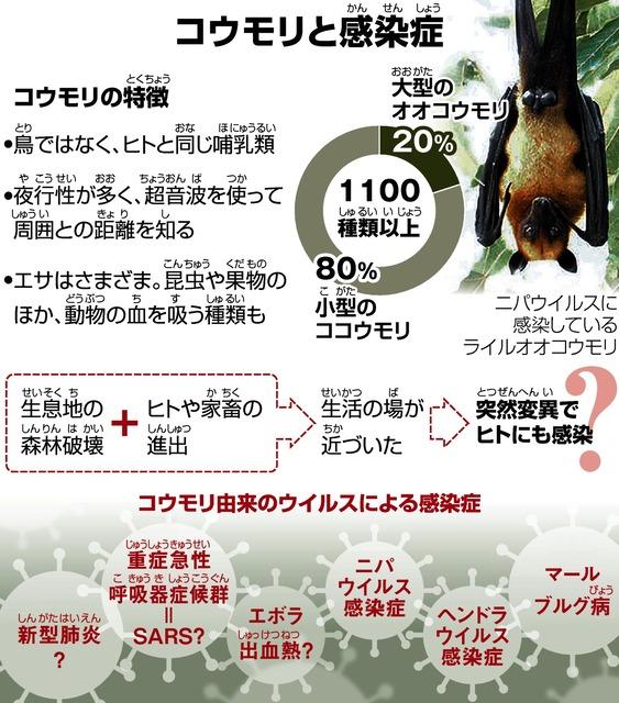 コロナ 中国 コウモリ