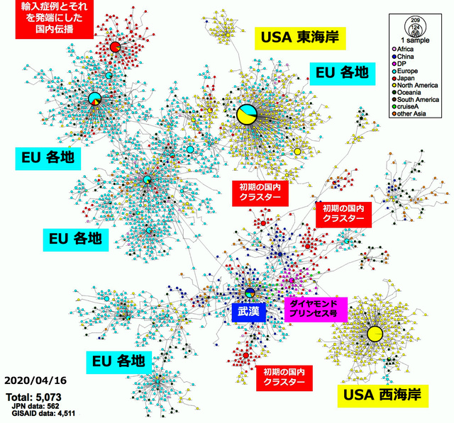 国内のコロナ、武漢ではなく欧州から伝播? 感染研調べ [新型コロナウイルス]:朝日新聞デジタル