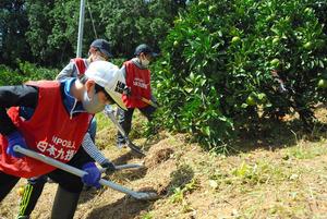 土砂崩れで埋まったミカンの木の根元を掘り起こす児童たち=2020年9月27日、大牟田市上内、竹野内崇宏撮影