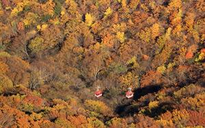 紅葉が深まる中、明智平展望台付近を行き交うロープウェー=2020年10月25日午後、栃木県日光市、朝日新聞社ヘリから、内田光撮影