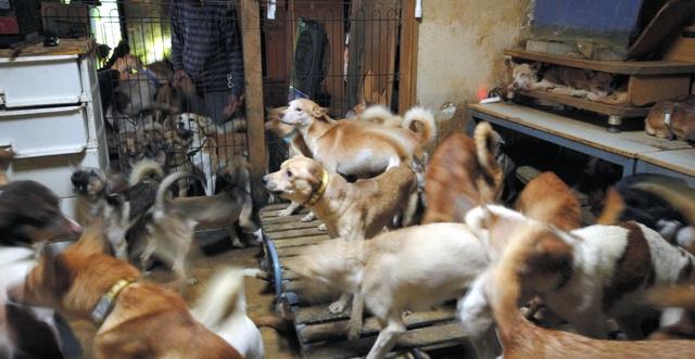 崩壊 犬 飼育 多頭