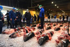 氷の上に並べられ、次々に競り落とされる「モウカザメ」=2020年12月27日、新潟県上越市木田3丁目、松本英仁撮影