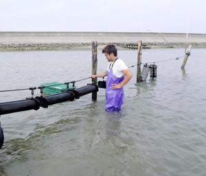 シングルシード方式によるカキの養殖施設。横一列につなげた網かごにカキが入っている。浅瀬なので干潮時には海から現れる=2019年5月9日午後2時3分、愛知県西尾市、県水産課提供