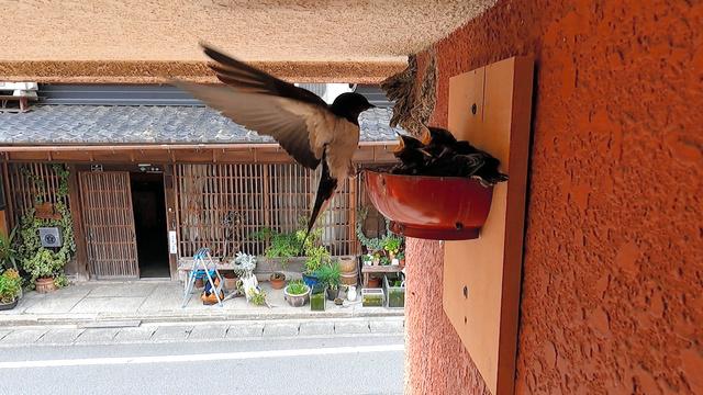 つばめ が 巣 を 作る 家