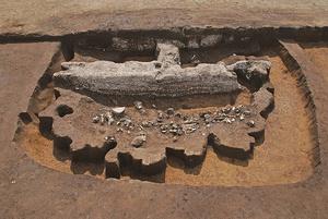 第5次調査で見つかった日本最古の動物儀礼跡(手前)。奥の白い層は約70センチに積み上がったヤマトシジミの貝殻の層=船橋市教育委員会提供