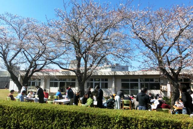 2019年4月、千葉県袖ケ浦福祉センターの更生園で、利用者たちがお花見をした=県社会福祉事業団提供