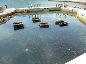沖合からウニが移された蓄養池=2021年6月15日、大船渡市三陸町、大船渡水産振興センター提供