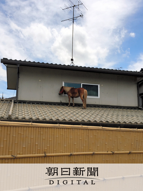 【西日本豪雨】🐴介護老人施設のアイドル馬、屋根の上で3日耐える 冠水の真備 YouTube動画>1本 ->画像>15枚