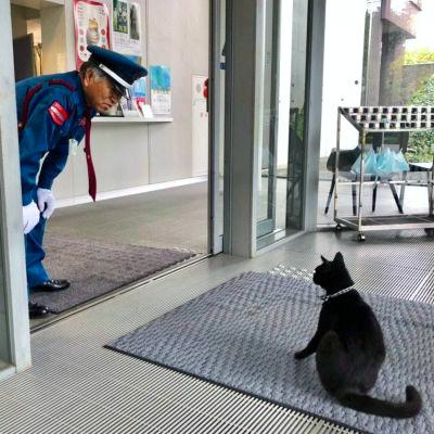 【速報】 猫と警備員、2カ月ぶりに再会 マスク姿でも分かったよ