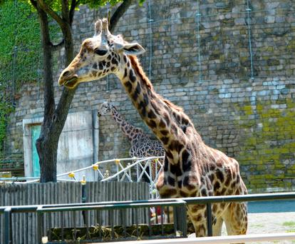 円山 動物園