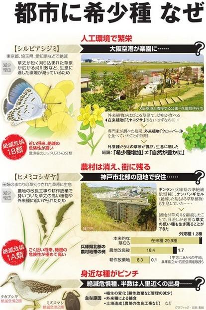 都市に絶滅危惧種、なぜ? 空港・団地…人工環境で繁栄:朝日新聞デジタル