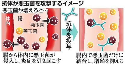 を 減らす 菌 悪玉