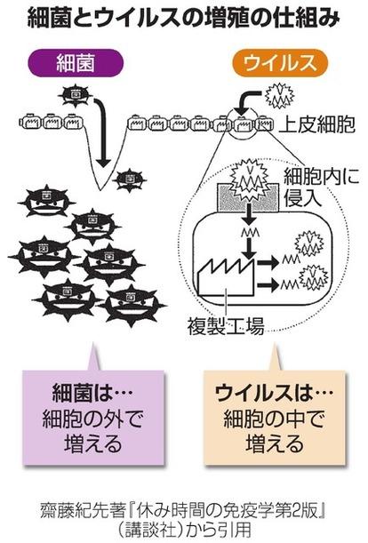 白血球 コロナ