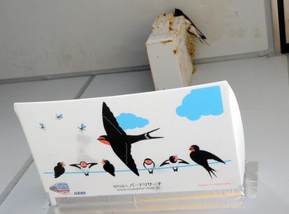 ツバメ の 巣 フン 受け ツバメ観察全国ネットワーク -