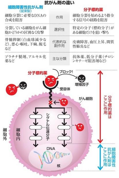 分子標的薬でがん細胞狙い撃ち 増殖信号を止める:朝日新聞デジタル