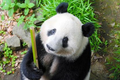 上野 動物園 再開