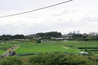見沼 田んぼ