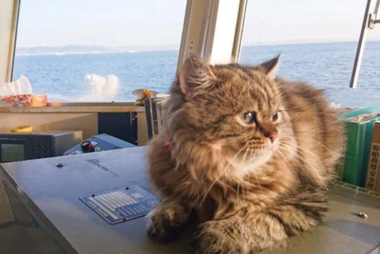 内航船で暮らす猫 「カンパチ船長」