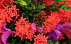 石垣島の自然が与えてくれる「よい加減」