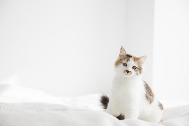 子猫といっしょにワンルームでスッキリ
