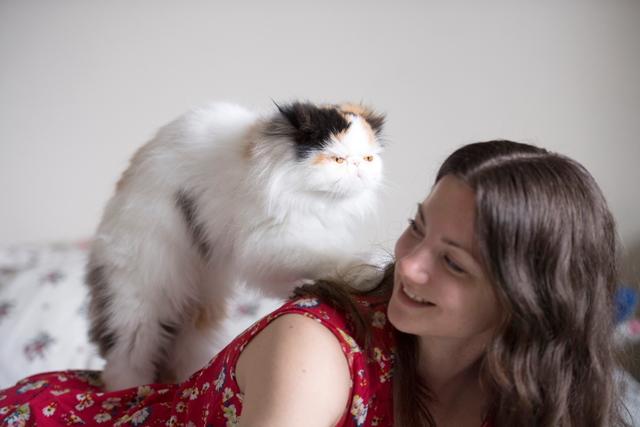 ペルシャ猫の特技はヨガとマッサージ