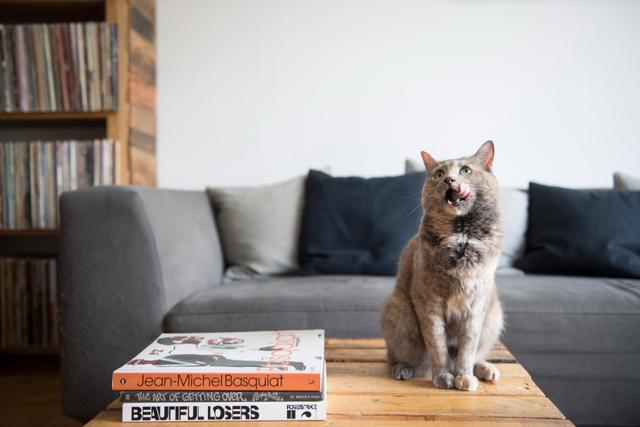 ブルックリンのヒップな猫暮らし