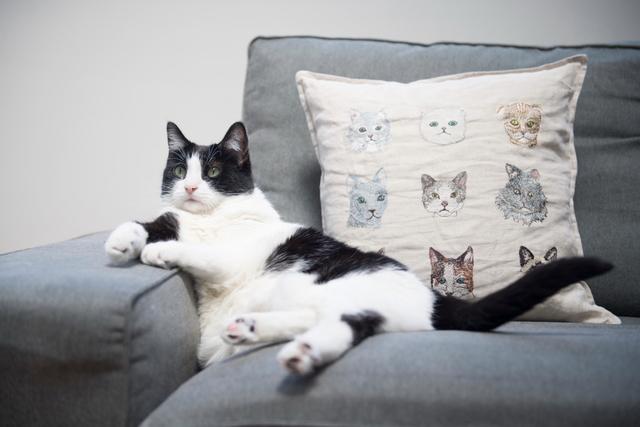 NYの猫と人、たとえばブルックリンの我が家の場合