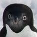 南極観測60年