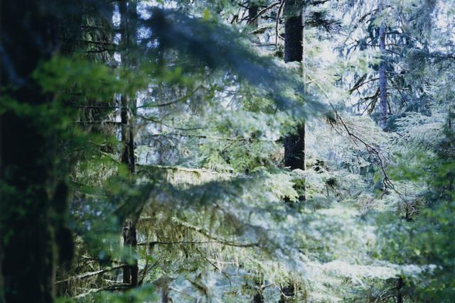写真家・上田義彦写真展「Forest 印象と記憶 1989-2017」