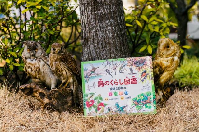 野鳥観察を始めるには、絶好の季節!