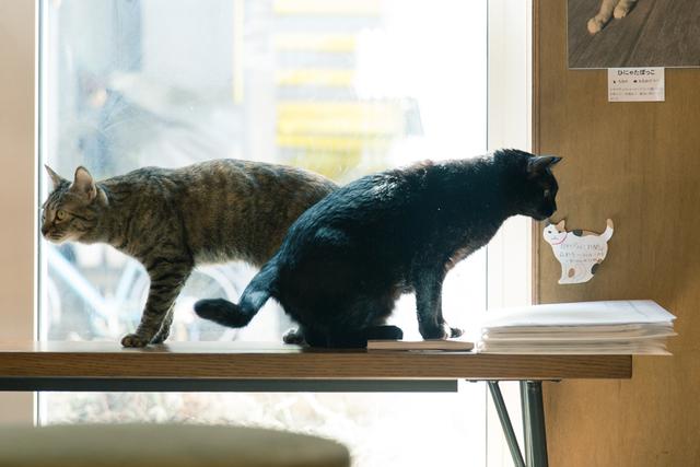 「猫と本屋の共存」を目指して