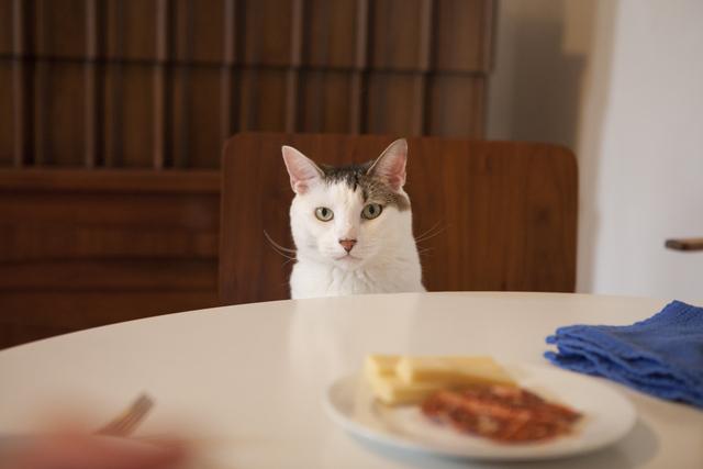 夫婦&内弁慶なオス猫、食卓に座るときはみんな一緒