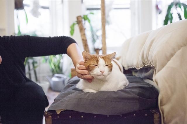 猫3匹とインコで暮らすワンルーム