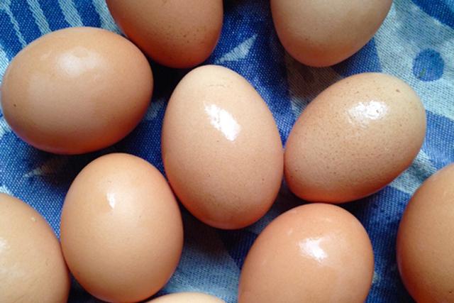 UAさん「カナダの島では、新米の卵屋」