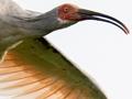 トキ放鳥から10年