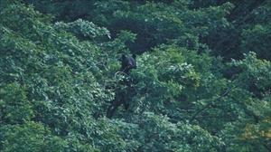 クマを森から出さないためにやるべきこと