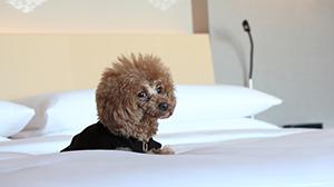 ザ・キャピトルホテル 東急の愛犬が同伴できる宿泊プラン