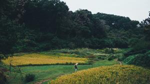 日本の美しい風景を守るためにロレックスが手掛けること
