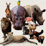 【プレミアムA】動物たちはどこへ 変わりゆく動物園