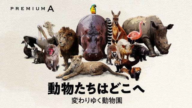 【プレミアムA】動物たちはどこへ
