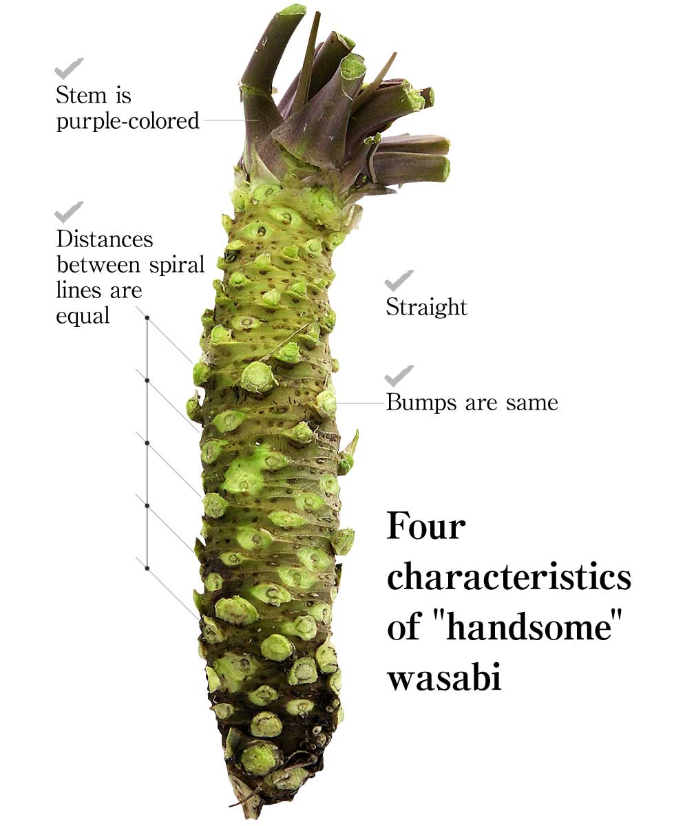 What is wasabi